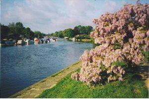 Removals Sunbury Surrey